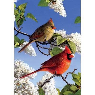 Cardinal et lilas