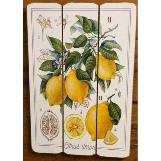 Art mural/ Plaque de Bois/ Citrus Lime  /24x36x1.8CM