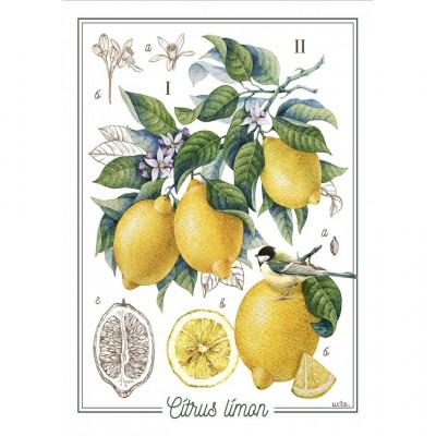 Linge à Vaisselle  100 % Cotton Citron et lime